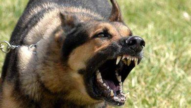 هاجمه كلبان شرسان..إصابة ضابط بإصابات بالغة بالتجمع